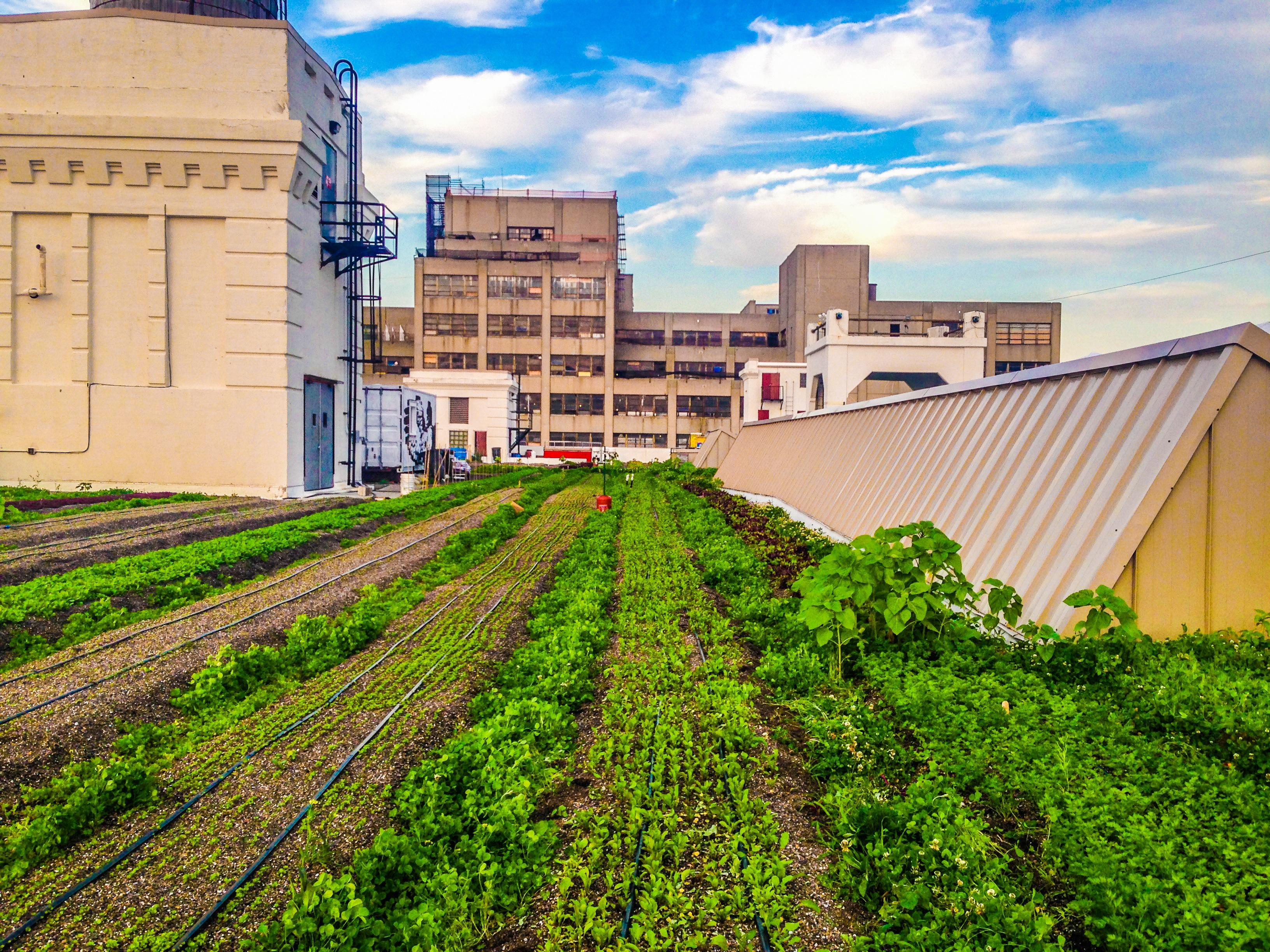 Brooklyn Grange Urban Rooftop Farming Natalie Vie